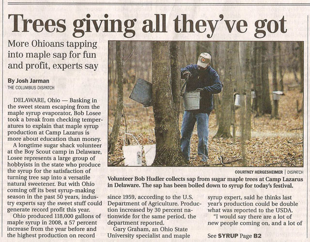 sugar maple article