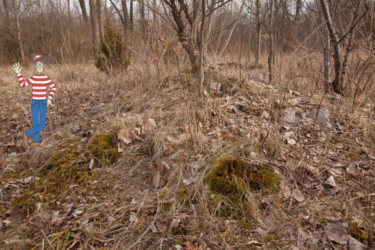Dicranum habitat Waldo