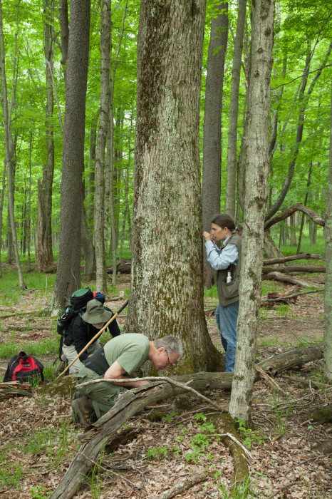 Bryologists barking up the right tree.
