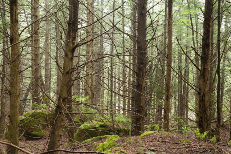 Ooooh. Spruce trees!!
