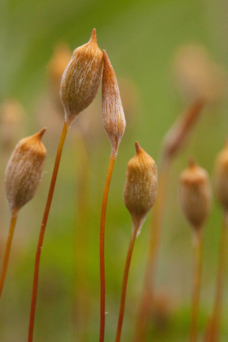 One of these sporophytes hasn't developed properly.