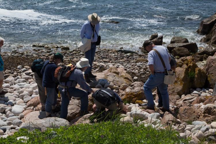 Crustose class looks at rocks.