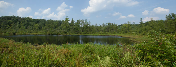 Triangle Lake Bog