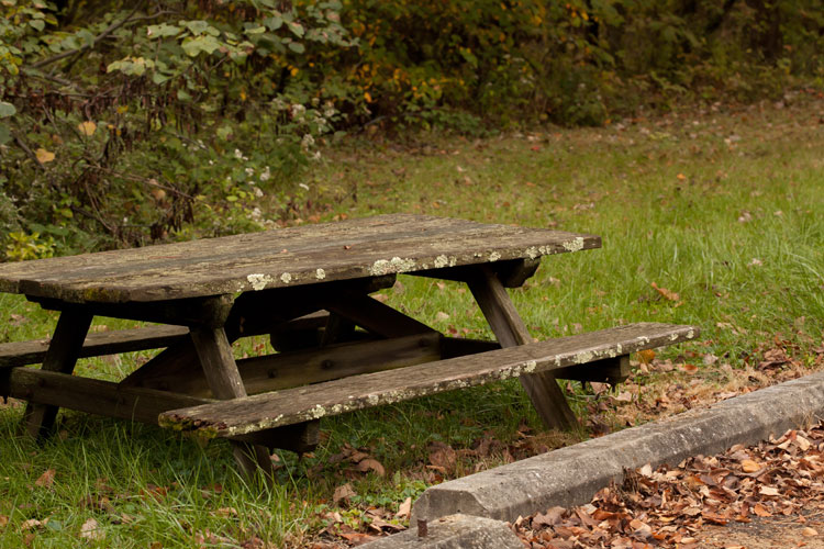 picnic table with Flavoparmelia and Cladonia
