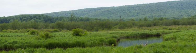 Beautiful marsh