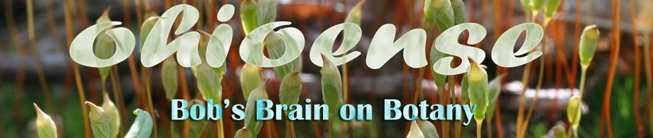 Bob's Brain on Botany