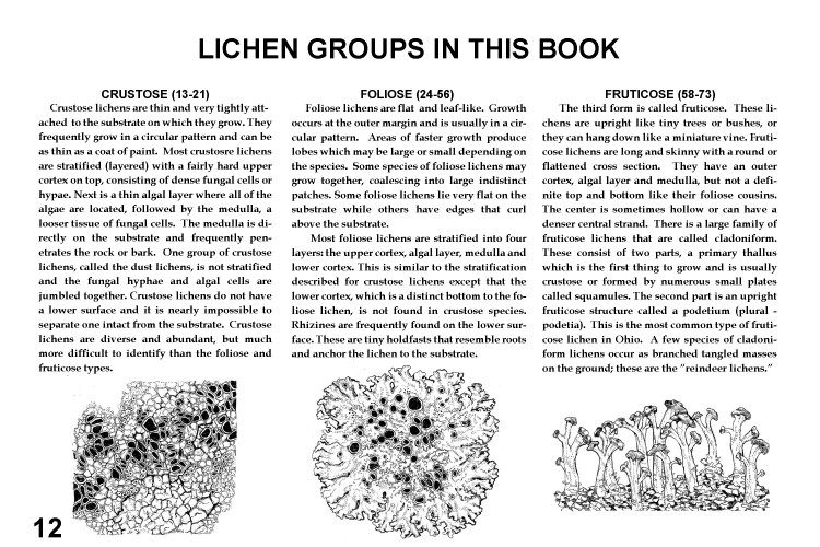 LICHEN GROUPS new
